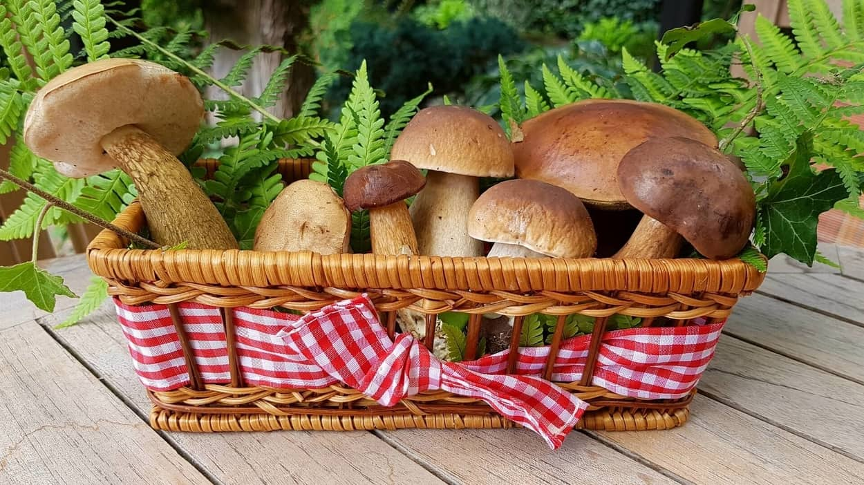 Everything about Different Types of Mushrooms and 10 Perfect Mushroom Substitutes