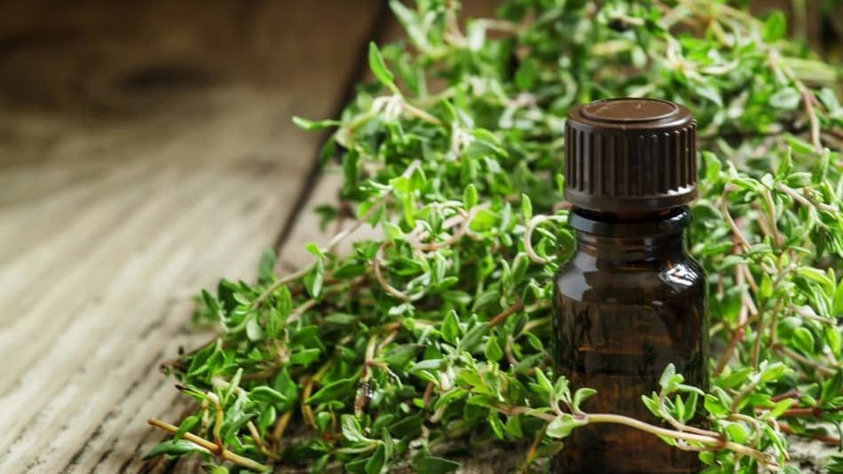 what spice is similar to marjoram? Thyme is similar to the marjoram, what do marjoram and thyme have in common, marjoram vs thyme, marjoram and thyme, marjoram thyme, can i substitute thyme for marjoram, marjoram or oregano for thyme substitute, marjoram or oregano for thyme substitute, is marjoram a substitute for thyme, can i substitute marjoram for thyme, substitute marjoram for thyme, is marjoram the same as thyme