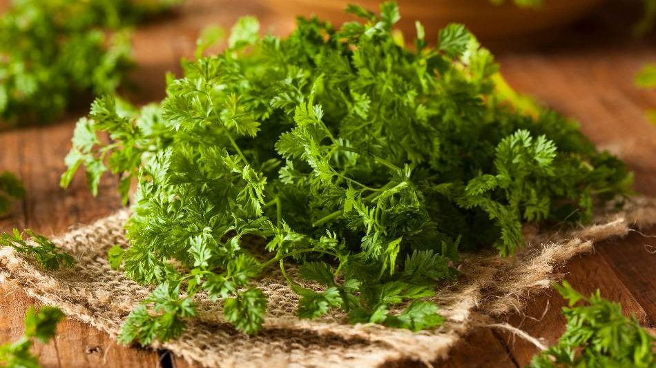 Chervil is the best coriander substitute. what is coriander substitute
