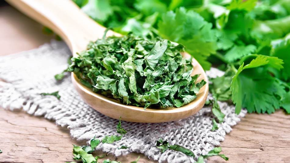 Cilantro is the Most Essential Substitutes for Basil, dried basil substitute, how much dried basil equals fresh basil